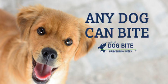 "Cute dog with the caption ""Any Dog Can Bite: National Dog Bite Prevention Week"""